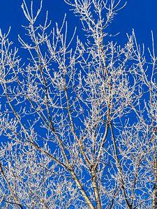 Sun Bright Rime Frost
