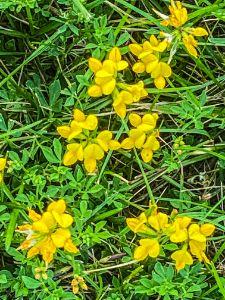 May's Landing: Wildflowers