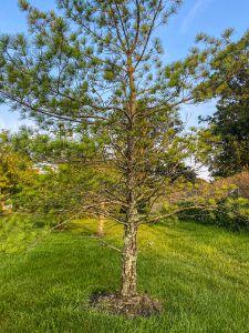 May's Landing: Unusual Trees