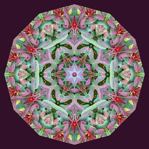 Colorful Shrubbery Mandala