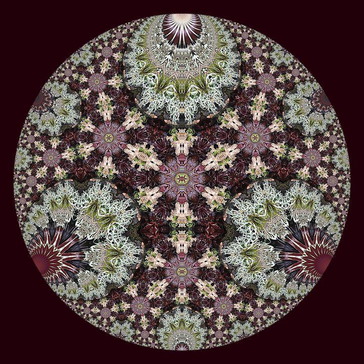 Hyperbolic Lichen - Digital Crafts