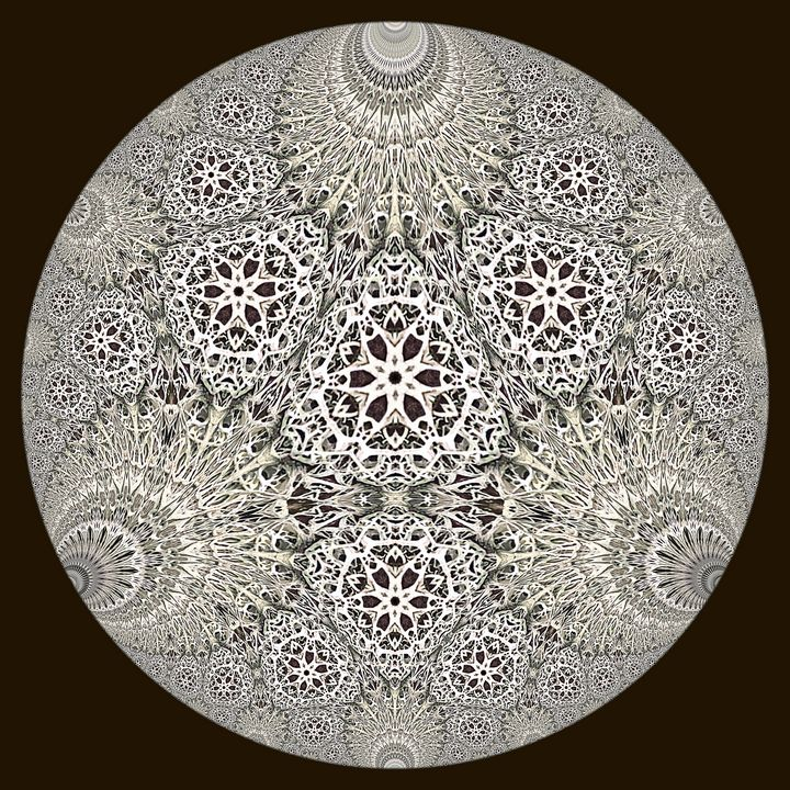 Hyperbolic Lichen - Digital Crafts