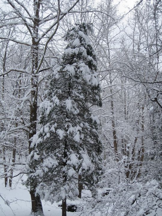 Trees in Winter - Country Life by Heath Forbes