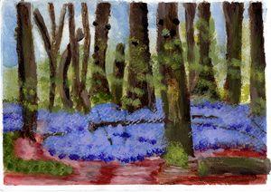 Bluebell Carpet