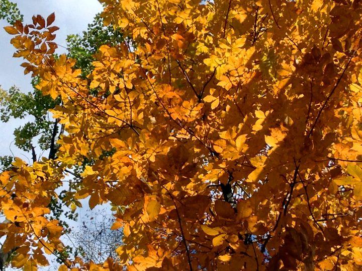 Golden Maple - Jinxtastic