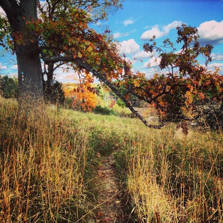 Autumn Stroll - Jinxtastic