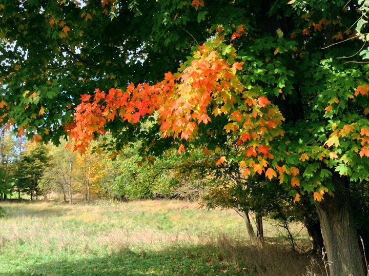 Rainbow Maple - Jinxtastic