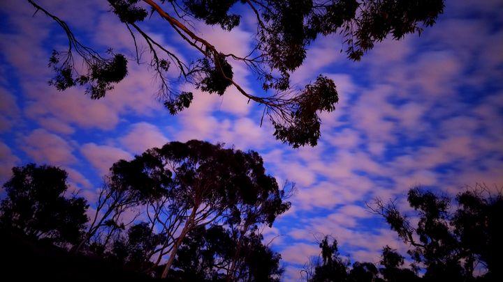 Skyscape - David Wood