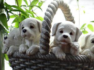 Random puppies