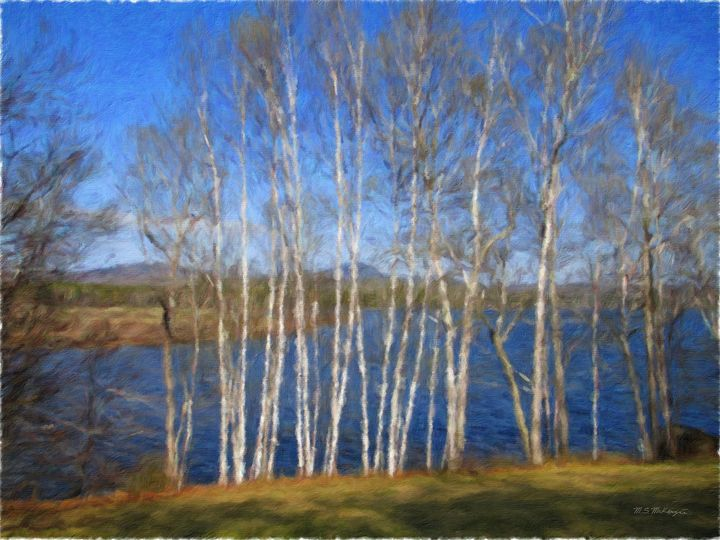 White Birch Grove - Saco River Art & Photography