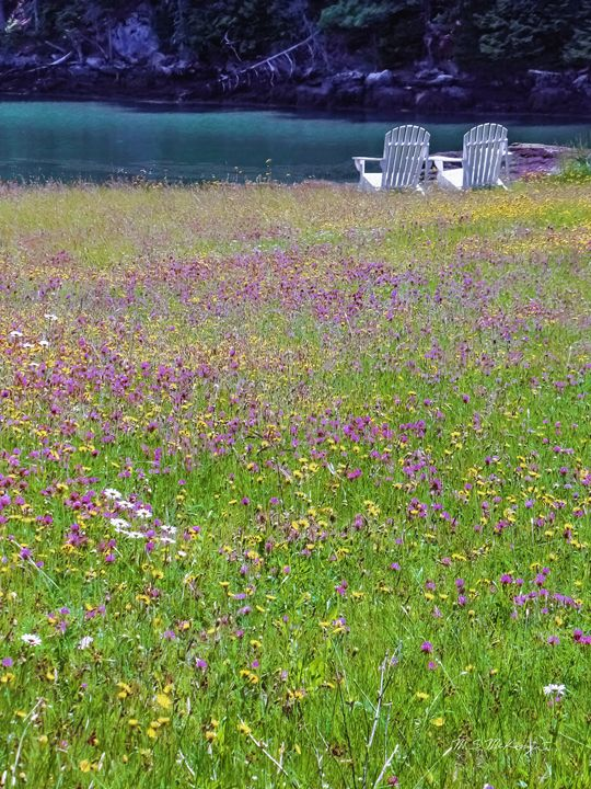 Sitting Out In A Field Of Clover - Saco River Art & Photography