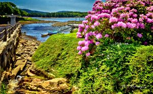 Low Tide on Somes Sound MDI - Saco River Art & Photography