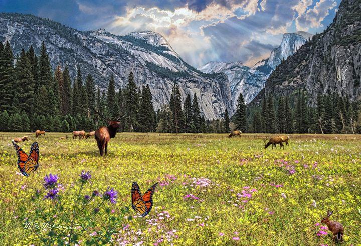 Elk Herd in Yosemite Valley - Saco River Art & Photography