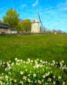 Windmills and Daffodils, Jamestown
