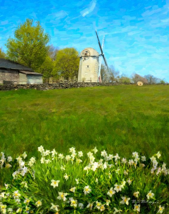 Windmills and Daffodils, Jamestown - Saco River Art & Photography