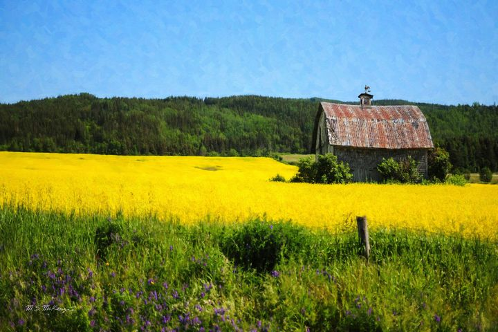 Alone in The Alfalfa, Coast Range OR - Saco River Art & Photography