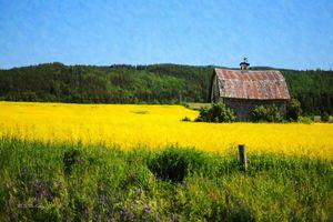 Alone in The Alfalfa, Coast Range OR