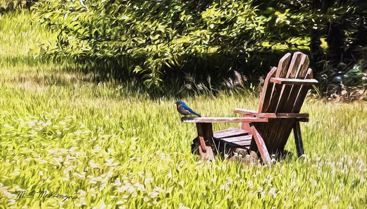 A Seat in the Clover - Saco River Art & Photography