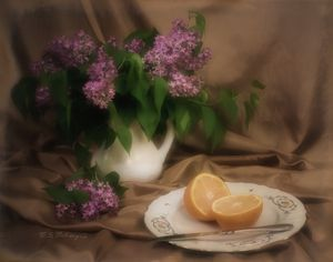 Dreaming of Lilacs and Oranges - Saco River Art & Photography