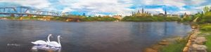 Swan Family Ottawa Ontario - Saco River Art & Photography