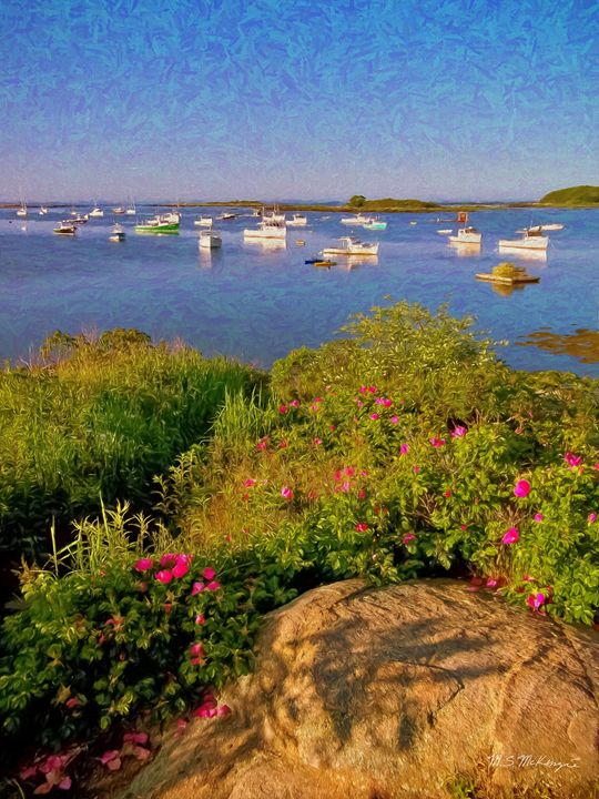Beach Roses Cape Porpoise - Saco River Art & Photography