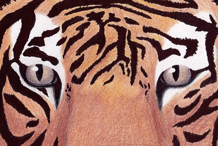 Tiger eyes - Watters Art