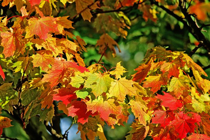 Autumn Leaves - William Bell