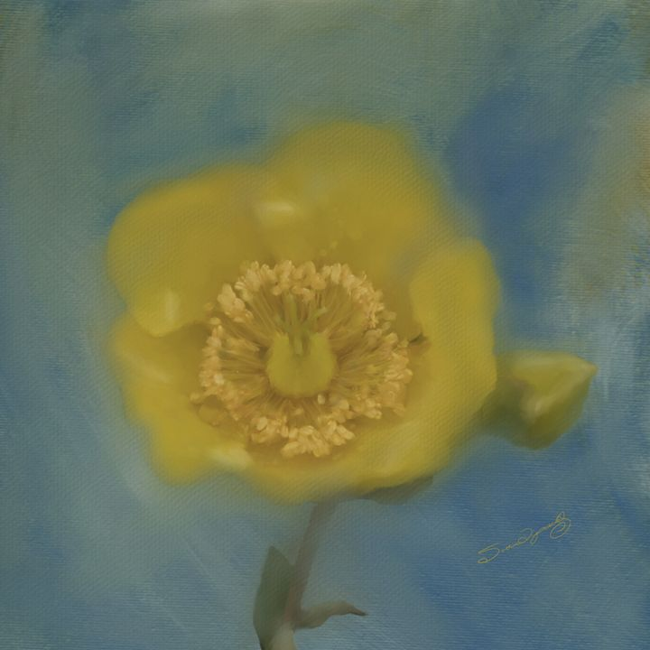 YELLOW FLOWER - SHAYNA PHOTOGRAPHY