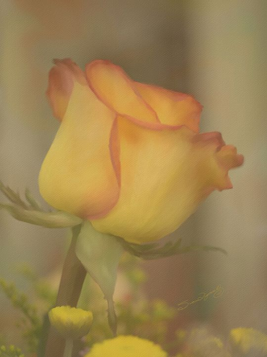 BLOOMING ROSE - SHAYNA PHOTOGRAPHY