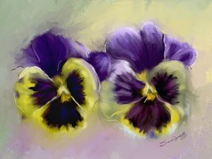 PANSY PALS - SHAYNA PHOTOGRAPHY