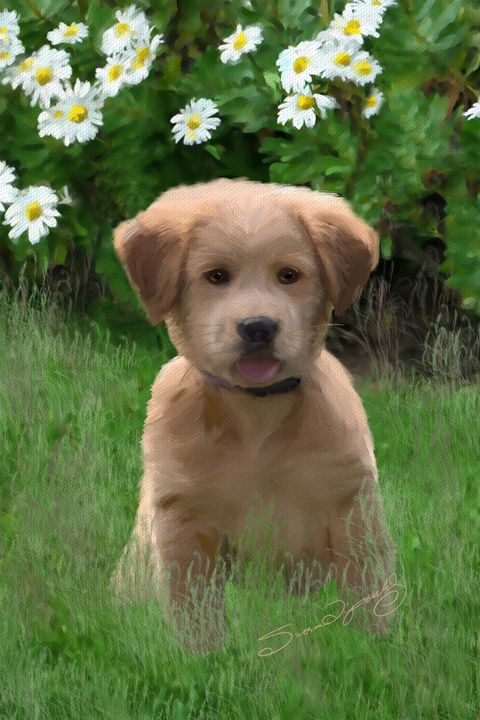 SWEETEST PUPPY - SHAYNA PHOTOGRAPHY