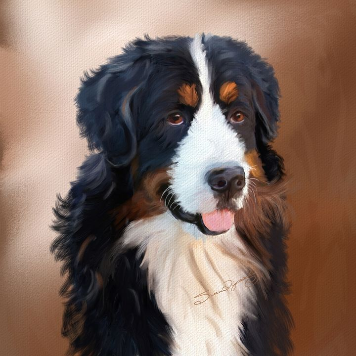 BERNESE MOUNTAIN DOG - SHAYNA PHOTOGRAPHY