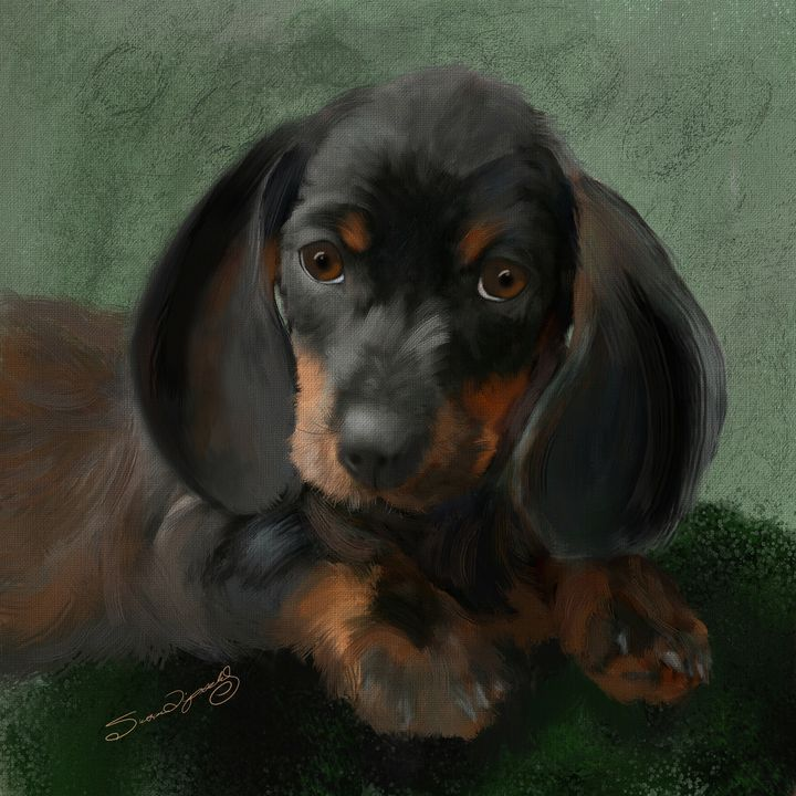 DACHSHUND PUPPY - SHAYNA PHOTOGRAPHY