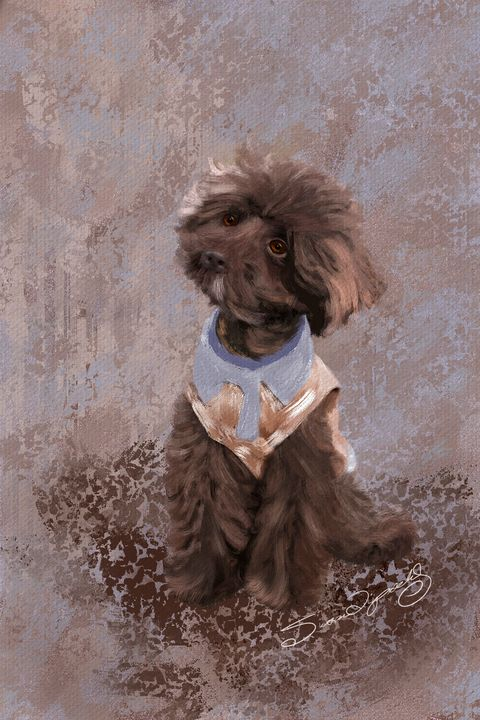 POODLE PUP - SHAYNA PHOTOGRAPHY