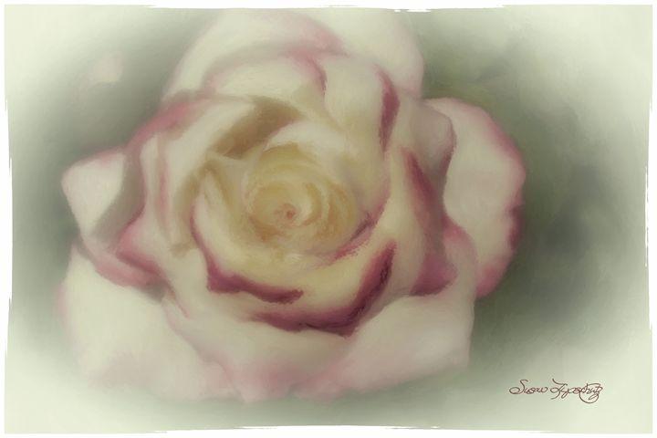 SOFTLY PAINTED ROSE - SHAYNA PHOTOGRAPHY