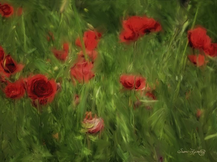 POPPIES BLOWING GENTLY - SHAYNA PHOTOGRAPHY