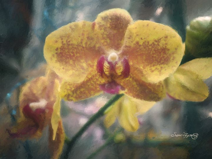 YELLOW PAINTED ORCHID - SHAYNA PHOTOGRAPHY