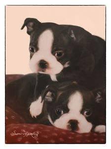 BOSTON BULL PUPS - SHAYNA PHOTOGRAPHY