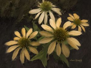YELLOW CONEFLOWERS - SHAYNA PHOTOGRAPHY