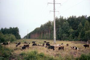 Pastorale. Province.