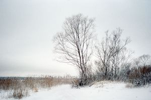 Bushes in winter