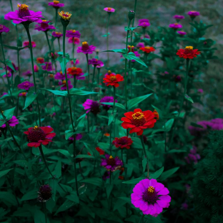 Poppies - Moon Frog Arts
