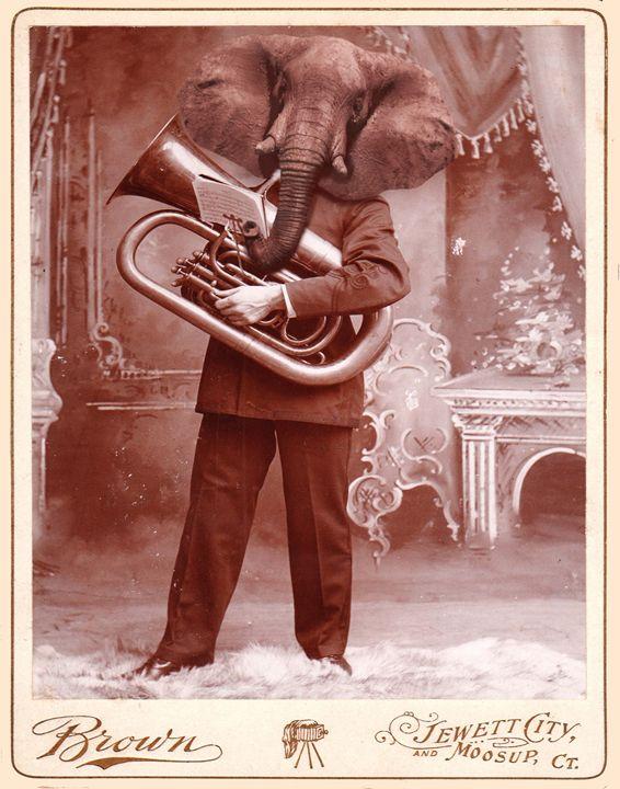 Distinguished Elephant - Amor Libertas Pop Prints