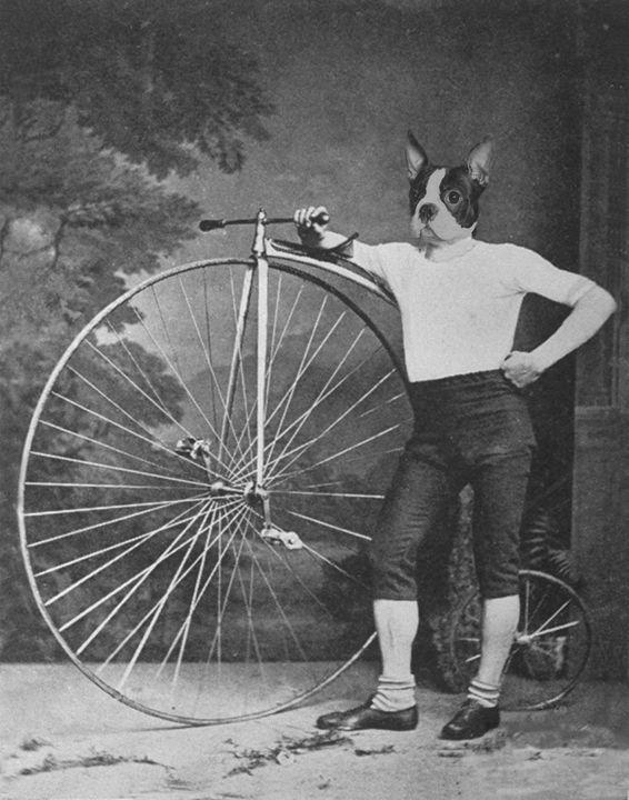 French Bulldog with Bike - Amor Libertas Pop Prints