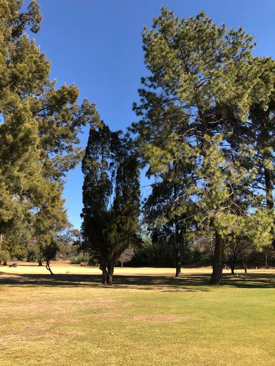 Trees in Winter - CutifyU Gallery
