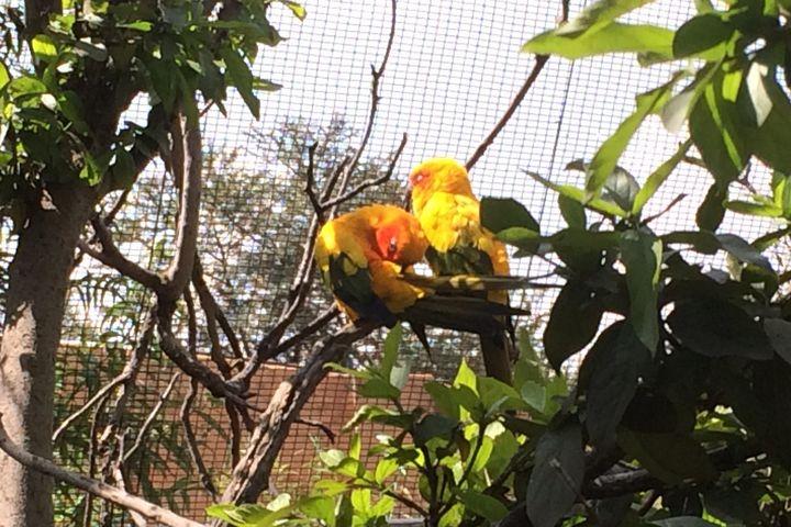 Birds on a Branch - CutifyU Gallery