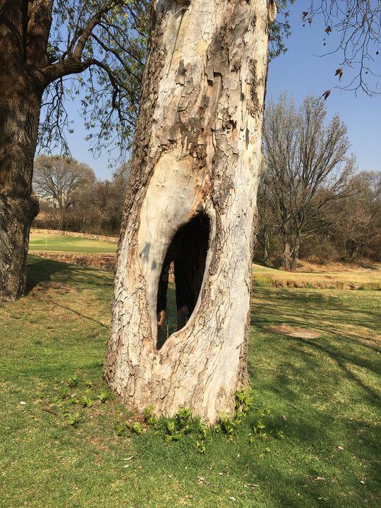 Hole in the Tree - CutifyU Gallery