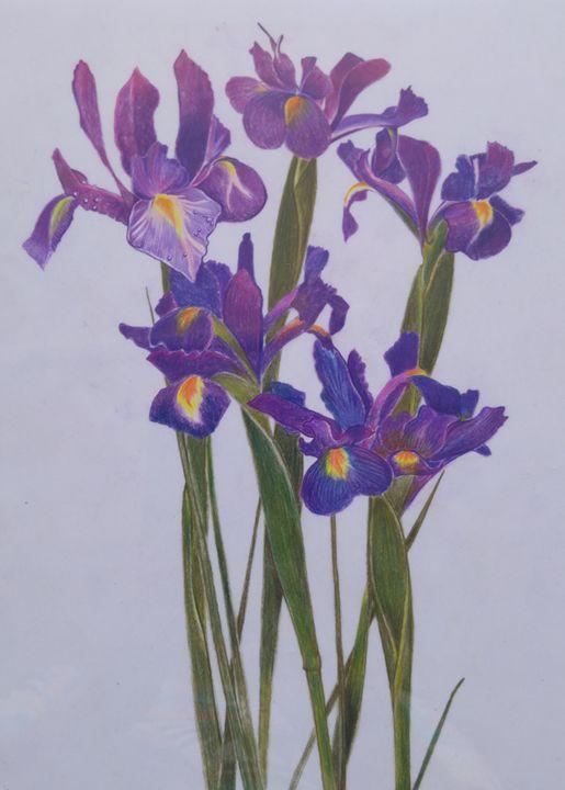Irises - natalija's gallery