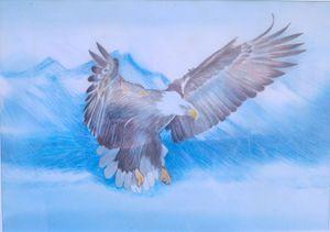 seagull - natalija's gallery