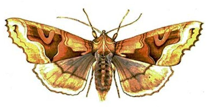 moth - natalija's gallery